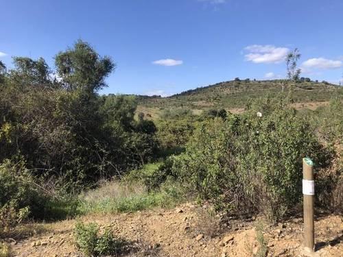 imagen 3 de Venta de finca con excelentes vistas en El Granado (Huelva)