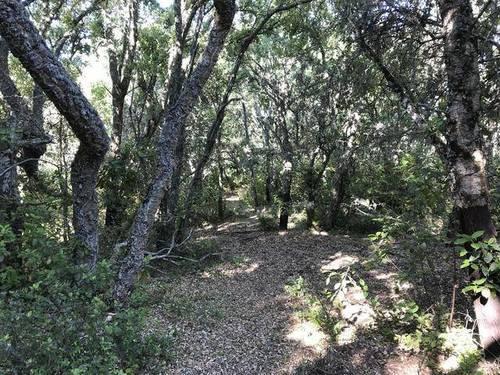 imagen 4 de Venta de preciosa finca en Aracena (Huelva)