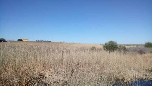 imagen 2 de Venta de terreno en Trigueros (Huelva)