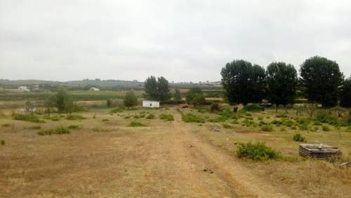 imagen 2 de Venta de finca en Bollullos Par del Condado (Huelva)
