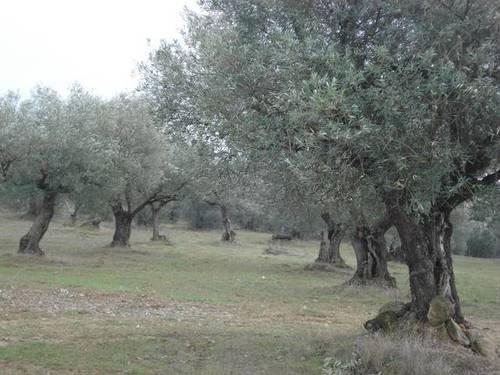 imagen 1 de Venta de finca en Barbastro (Huesca)