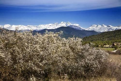 imagen 2 de Venta de finca en el valle de Bruello, Aínsa (Huesca)