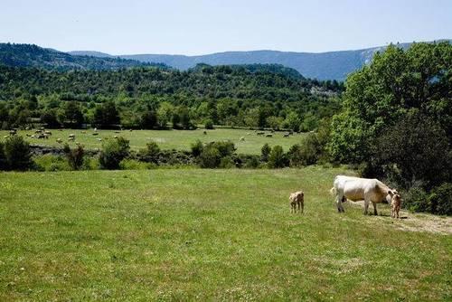 imagen 1 de Venta de finca en el valle de Bruello, Aínsa (Huesca)