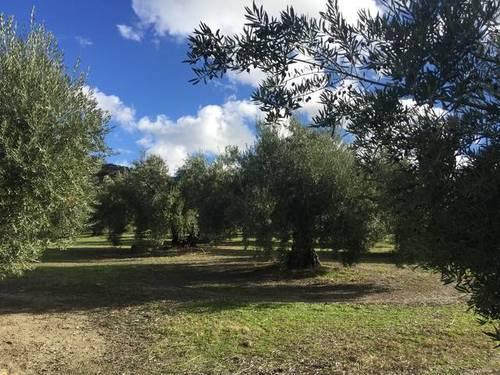 imagen 1 de Venta de magníficas fincas olivares en Alcalá la Real (Jaén)