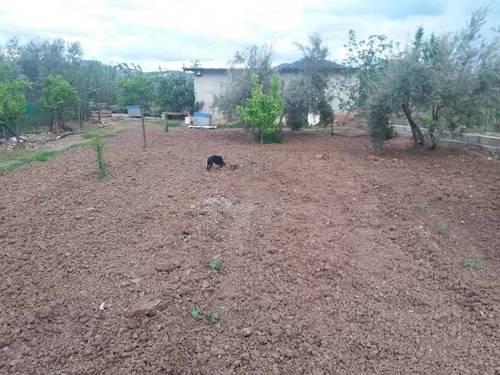 imagen 2 de Venta de huerta y olivar en Alcaudete (Jaén)