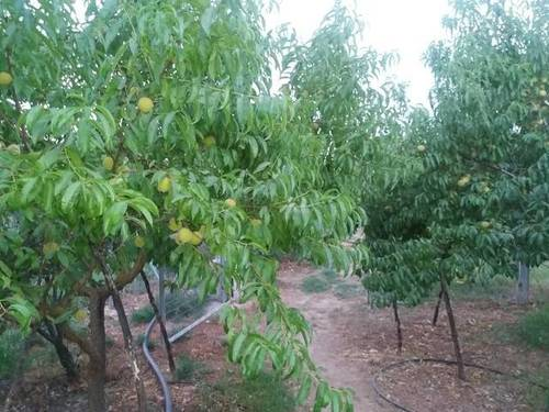 imagen 3 de Venta de huerta y olivar en Alcaudete (Jaén)