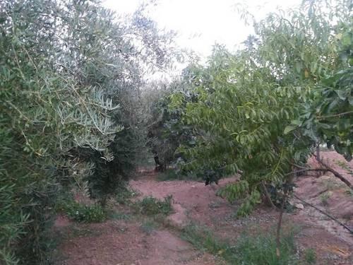imagen 4 de Venta de huerta y olivar en Alcaudete (Jaén)