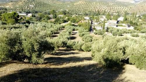 imagen 1 de Venta de finca olivar en paraje Morales (Jaén)
