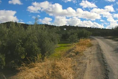imagen 2 de Venta de campo olivar en Alcalá la Real (Jaén)