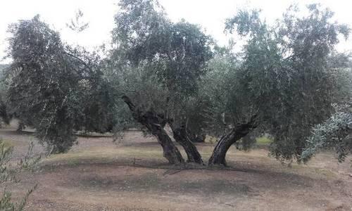 imagen 1 de Venta de finca en Linares (Jaén)
