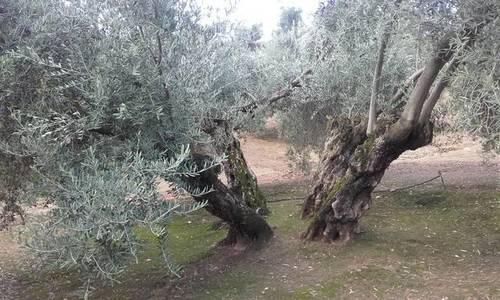 imagen 2 de Venta de finca en Linares (Jaén)