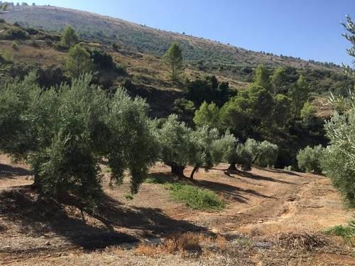 imagen 1 de Venta de finca olivar y cortijo en Jamilena (Jaén)