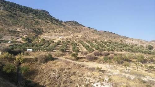 imagen 2 de Venta de finca olivar con nacimiento en Larva (Jaén)