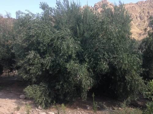 imagen 1 de Venta de olivar en Úbeda (Jaén)