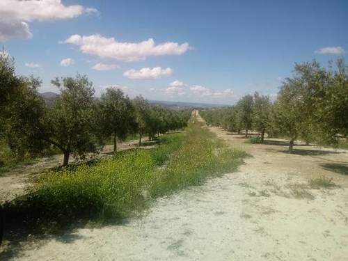 imagen 2 de Venta de finca en Huesa (Jaén)