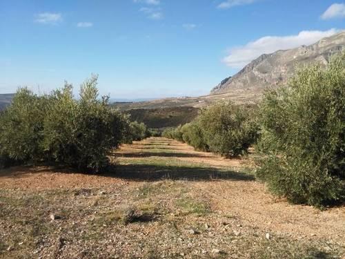 imagen 1 de Venta de finca de olivos en Bedmar (Jaén)