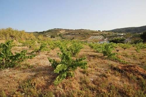 imagen 2 de Venta de magnífico viñedo en Torre del Campo (Jaén)