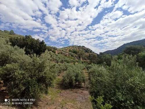imagen 1 de Venta de finca de olivos en Mogón (Jaén)