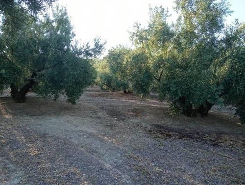 imagen 1 de Venta de finca en Bedmar (Jaén)