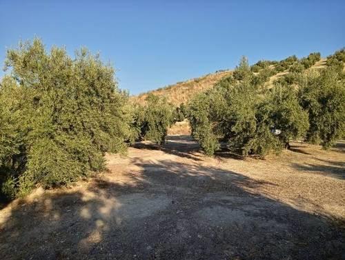 imagen 2 de Venta de finca en Bedmar (Jaén)