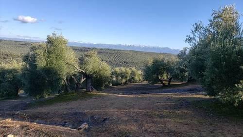 imagen 1 de Venta de finca olivar en Úbeda (Jaén)