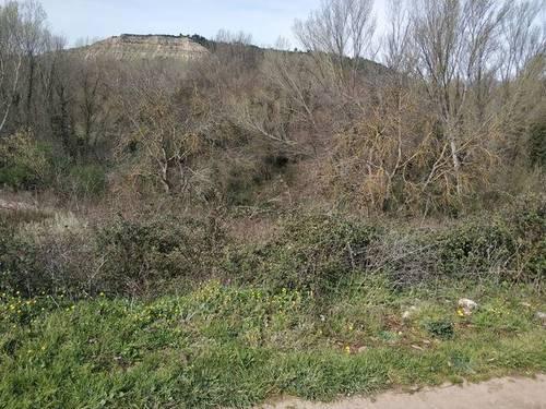 imagen 2 de Venta de terreno en Cenicero (La Rioja)
