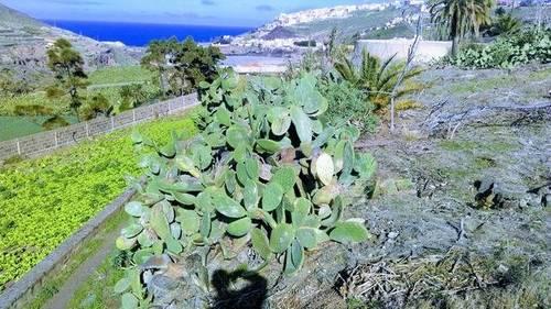 imagen 2 de Venta de finca en Las Palmas de Gran Canaria.