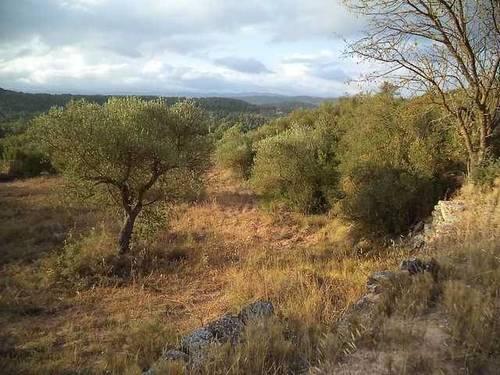 imagen 1 de Venta de estupenda finca Cervia De Les Garrigues (Lérida)