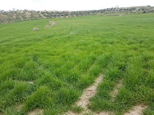 imagen 1 de Venta de terreno en  Les Borges Blanques/Borjas Blancas (Lérida)