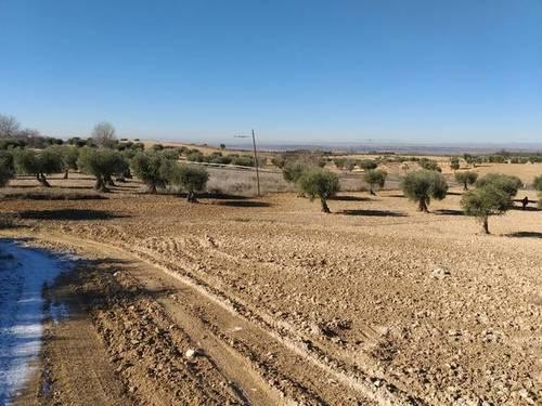 imagen 1 de Venta/Alquiler de finca olivar en Chinchón (Madrid)