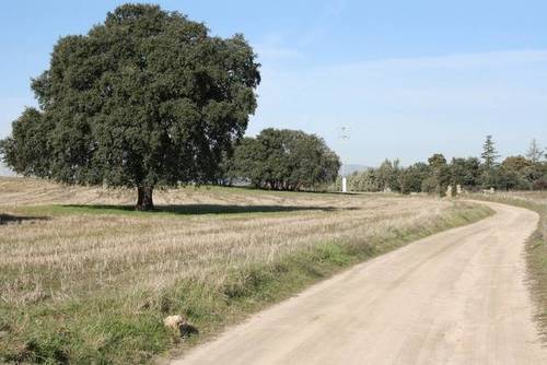 imagen 1 de Venta de terreno en Brunete (Madrid)