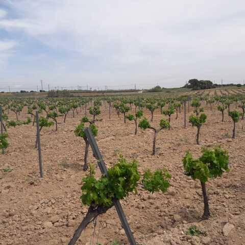 imagen 1 de Venta de viñedo en Villa del Prado (Madrid)