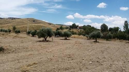 imagen 1 de Venta de campo olivar en Carabaña (Madrid)