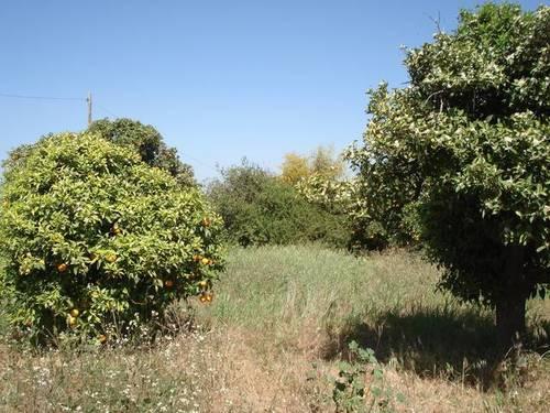 imagen 1 de Venta de finca olivar y frutales en Alhaurín el Grande (Málaga)