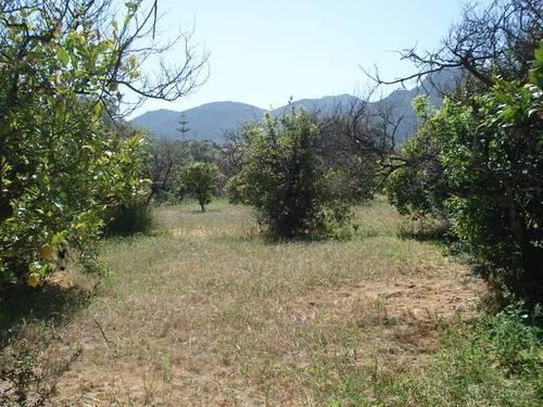 imagen 2 de Venta de finca olivar y frutales en Alhaurín el Grande (Málaga)