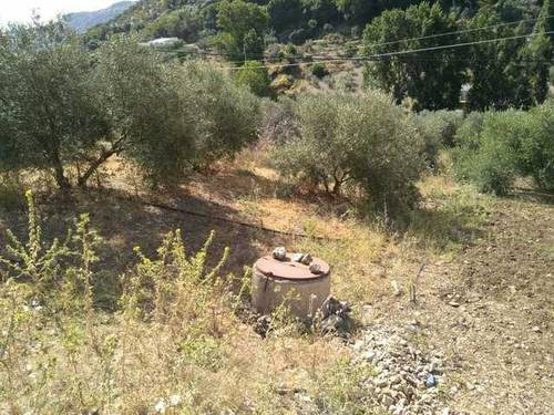 imagen 1 de Venta de olivar en Serrato (Málaga)