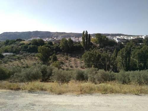 imagen 2 de Venta de olivar en Serrato (Málaga)