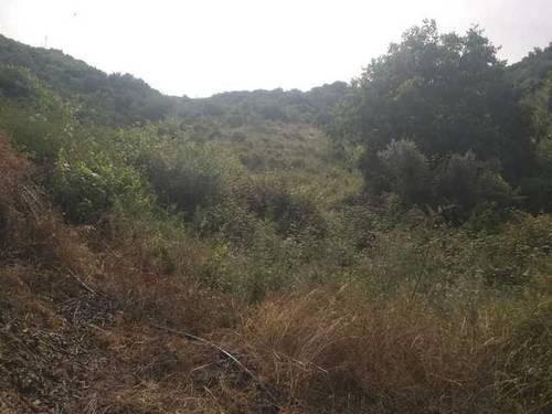 imagen 2 de Venta de tierras en Torrox (Málaga)