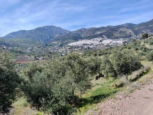 imagen 1 de Venta de finca con olivos centenarios en Casarabonela (Málaga)
