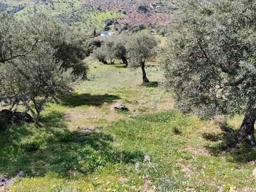 imagen 2 de Venta de finca con olivos centenarios en Casarabonela (Málaga)
