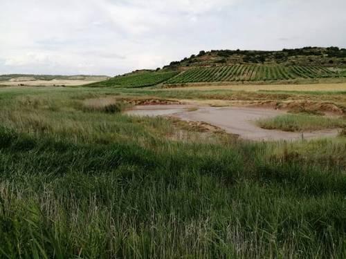 imagen 1 de Venta de finca en Lodosa (Navarra)