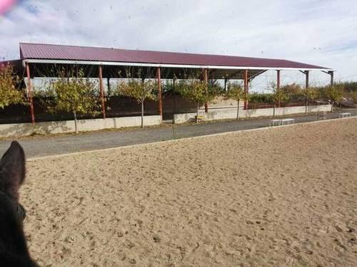 imagen 5 de Venta de hípica en Tudela