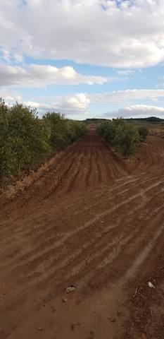 imagen 1 de Venta de olivar en Corela