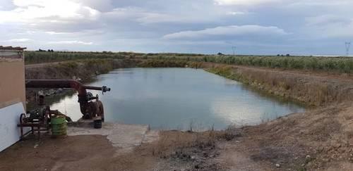 imagen 2 de Venta de olivar en Corela