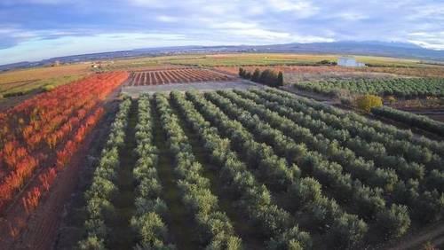 imagen 1 de Venta finca de olivos