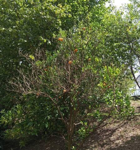 imagen 4 de Venta de terreno rústico en Errandio