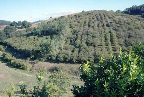 imagen 1 de Se vende parcela vallada con frutales en zamudio