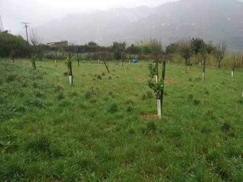 imagen 2 de Se venden 4 fincas rústicas colindantes en Ortuella