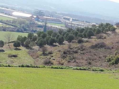 imagen 1 de Venta de olivar de arbequina en Berantevilla