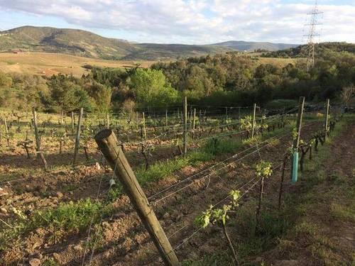 imagen 1 de Venta de viñedo en Laoruco